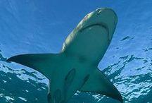 Sharks! / by Georgia Aquarium