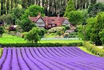 Secret Love Affair with England / A life long Wonder.. / by Donita Hellmann