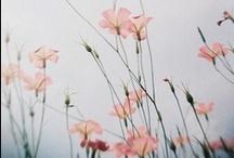 Flowers / by Mio K