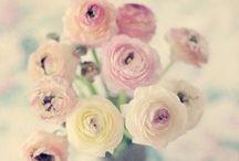 Flowers / by N *