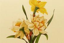 Botanical illustrations 2 / by Brian Thornbury