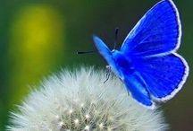 Delicate Wings / Butterflies, Moths, Dragonflies / by Diane Stauffer