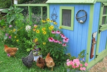 The Hen House / by Amy Tipton
