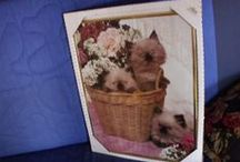 cat wall pictures / by Tacy Miller