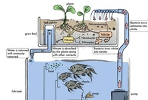 Aquaponics / by Permaculture Lifestyles
