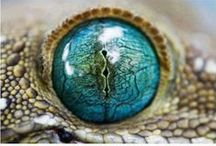 Reptile Hobbyist / by Lady Lizard