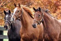 Horses / by Winter Austin