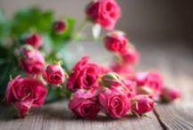Roses / by Yuko Imae