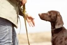 Dog Health & Training / by Melissa G