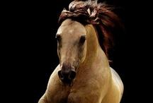 Heavenly Horses / by Leslie Gray