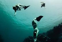 ◀◢◤▸ Deep Blue Sea ◂◥◣▶ / by ❦ ℓyᶯdₐl☉ʊ l✪✪℘¡l◎◎ ❦