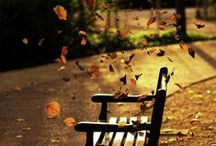 I love Fall-Lal / by Jennifer Michalka