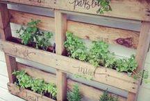 Gardening / by Jennifer Michalka