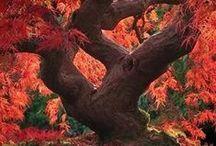 Trees / I enjoy trees. / by Sarah Hemann