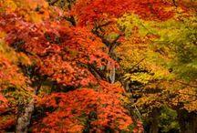 Autumn / by Sara C