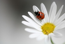 Lady Birds and Butterflies / by Elena Grant
