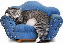 Cat Stuff / by tammy herman
