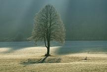 ✿ TREES ✿ / by Lniana Polka