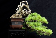 BONSAI / by Mhaul Zanardi