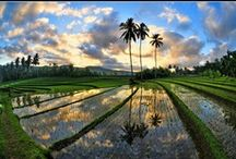 Bali Rijstvelden / Rent the house  from the oysterking in Bali at the beach www.villabuddha.com moniquekruyssen@zonnet.nl €1495,- a week included staff / by Oesterkoning Oesterman Bali Villa Buddha