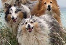 Dogs / by Nancy Landfried