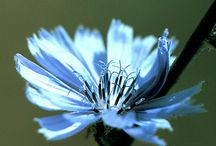 Flores de Bach / by Ana Cris