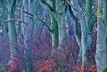 Trees / Bäume / Schöne Bilder von Bäumen / by Uschi Iseli