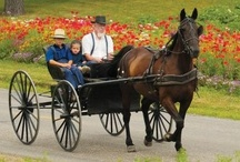 amish / by willi knevel
