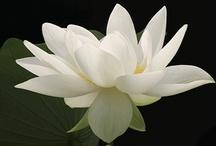 flowers / by swati shah