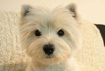 Puppy Love / Dog stuff / by Chrissy Cadogan