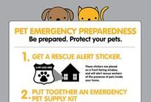Pet Preparedness / Include enough food and water in your emergency kit to keep your pet healthy and happy for at least one week. / by City of Bellevue OEM