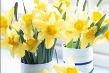 Spring has SPRUNG  / by Jaclyn Weisberg