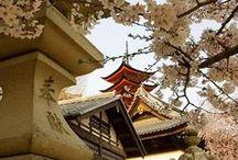 JAPANESE / by MARIA JOSE GONZALEZ GARCIA