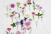 Bloom / by christine adolph