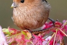 Wild birds / by Linda Meleyal