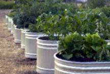 Wheeds -in my- barrel / Gardening / by Taira Barron Cran