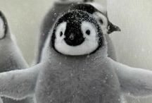 PENGUIN. / by Colleen, The Smart Cookie Cook