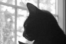 Cats / by Cathy Lynn Stephenson