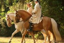 Lusitano horses / by Forelock & Feather