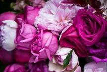 Fuchsia Magenta Wedding / by Jenny Chamtings