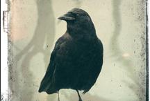 crows ... ravens... blackbirds / by Wopsim