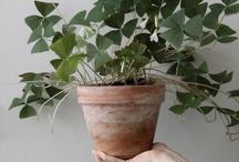 planten | bloemen / by Suzanne Zwaan