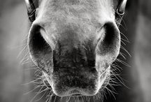 Equestrian / by Brenna Woolsey