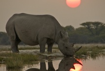 South Africa / by Fossil Rim Wildlife Center