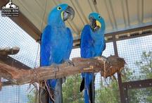 Children's Animal Center / by Fossil Rim Wildlife Center