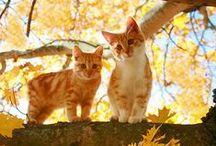 Cat Love / cats / by Rachel