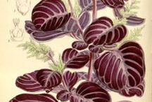 Botanical / by Susan Blake