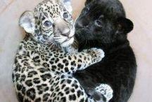 My Beautiful Zoo! / by fanny morton