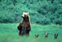 Animal Planet / by Boho Hippie