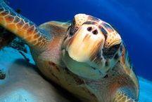 Hawaii Wildlife Fund / Save The Turtles / by Maui Ocean Treasures